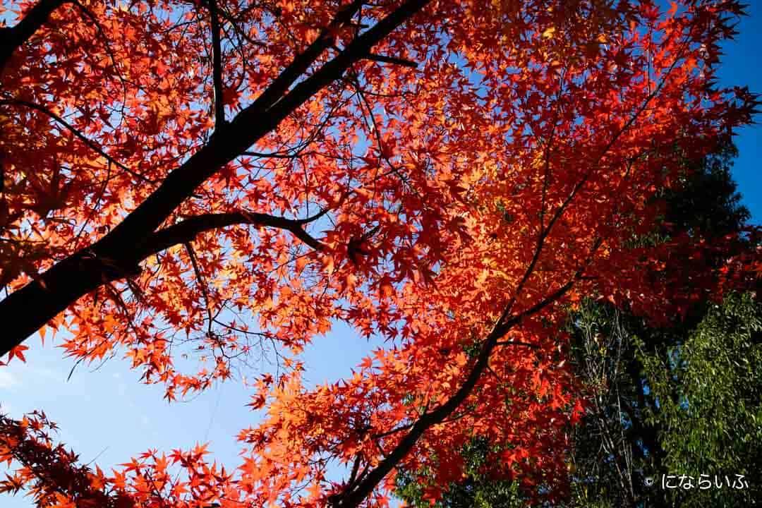 戸倉上山田温泉の紅葉
